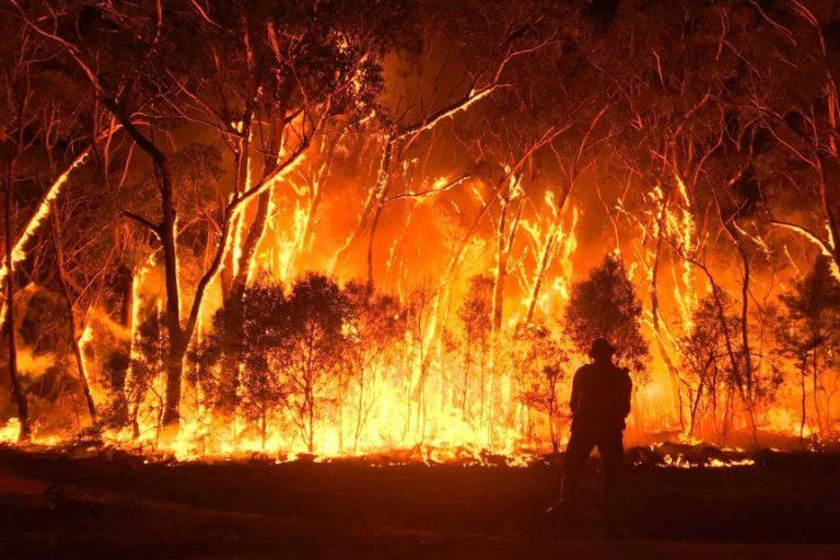 Bushfire Protection Garden Design