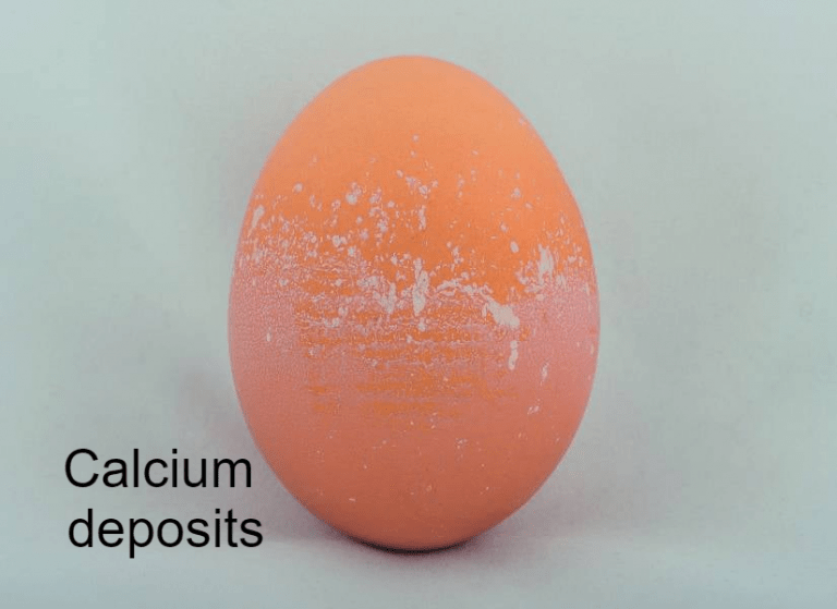 Egg Whispering – Using Eggs to Assess Hen Health