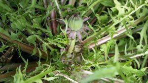Love your weeds!
