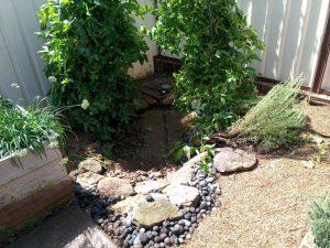 Creating a Balanced Ecosystem Pond