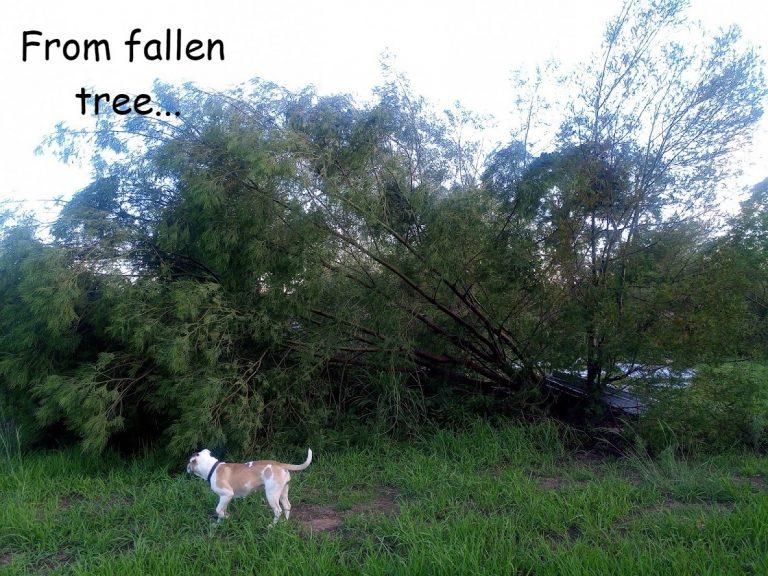 Fallen Tree becomes Summer Shade, Trellis and Fertiliser