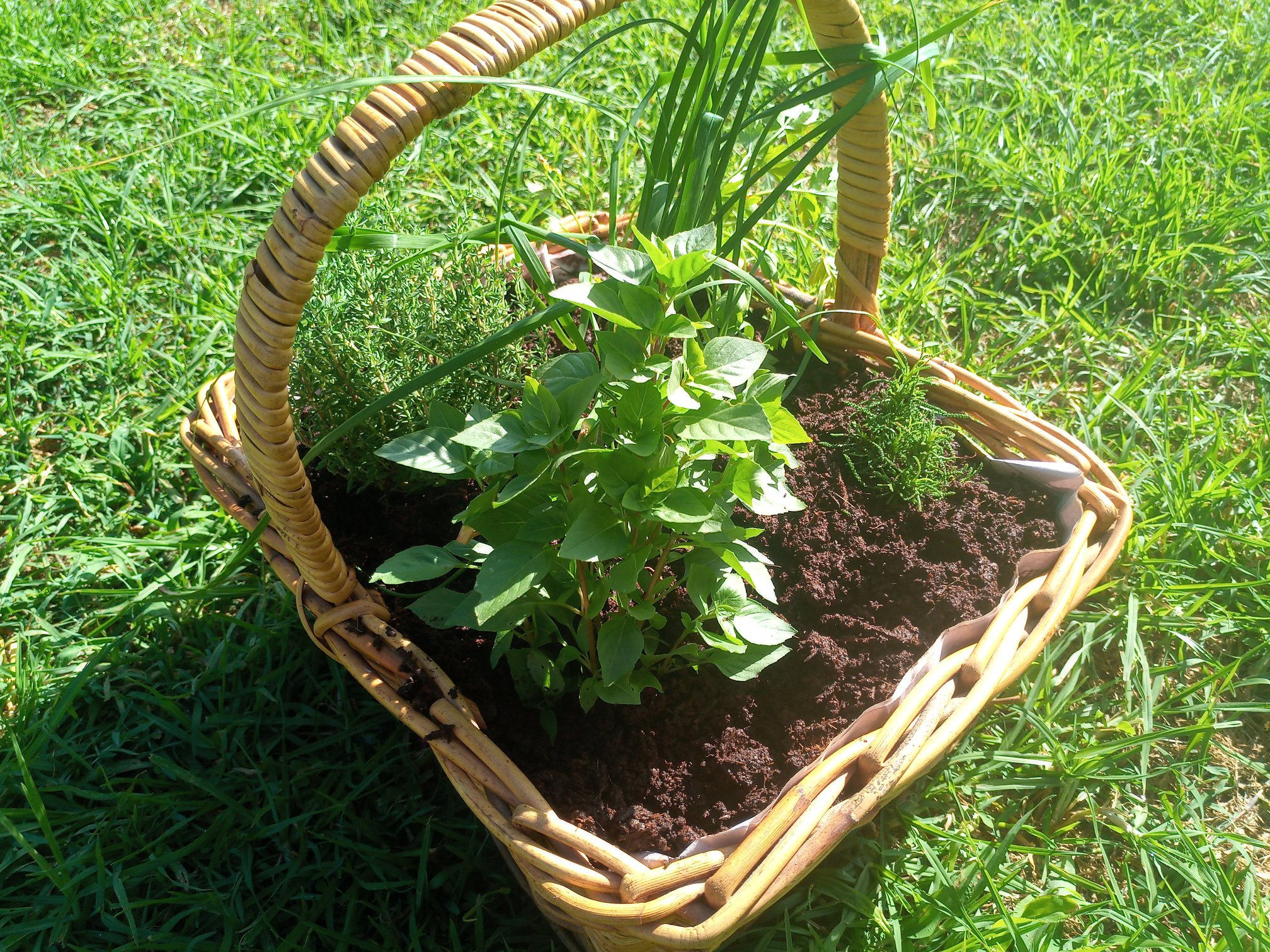 Holiday Herb Basket – Taking your Garden with you