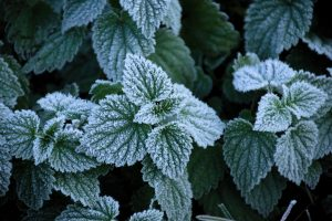 Surviving The Frost