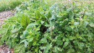 Garden Retrofit Ideas & Tips